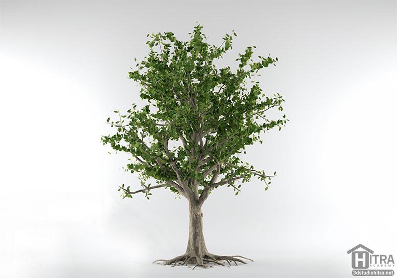 مدل سه بعدی درخت گیلاس