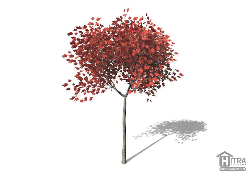 آبجکت درخت افرا